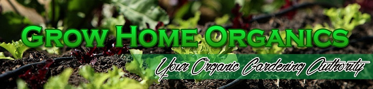 Grow Organic Vegetables