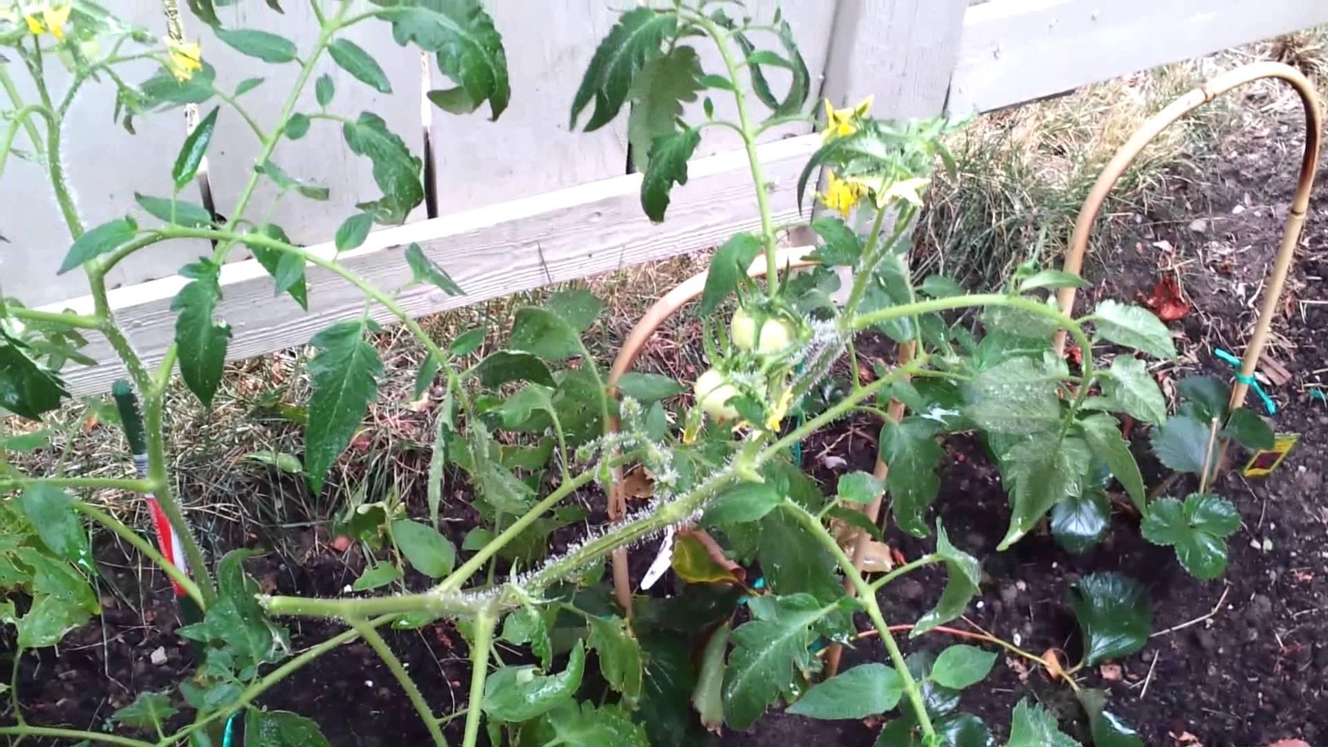Methods to Rid Your Backyard associated with Fleas | Grow ...